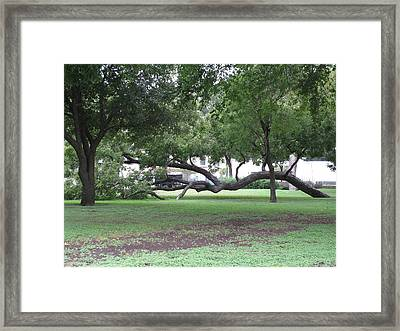 Same Kind Of Different Framed Print by Shawn Hughes