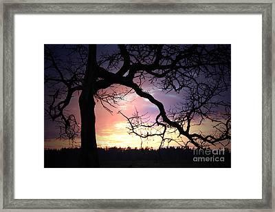 Samhain Framed Print by C E Dyer