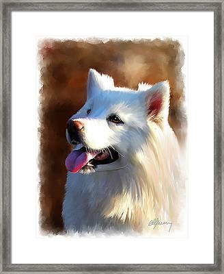 Samoyed Polar Dog Portrait Framed Print by Michael Greenaway