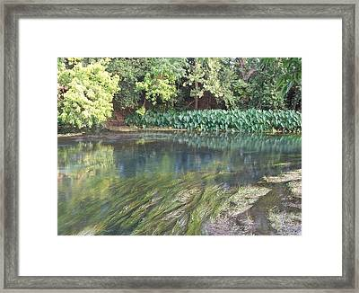 Framed Print featuring the photograph San Marcos River Texas by Elizabeth  Sullivan