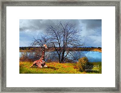 Sanctuary . 7d12636 Framed Print by Wingsdomain Art and Photography