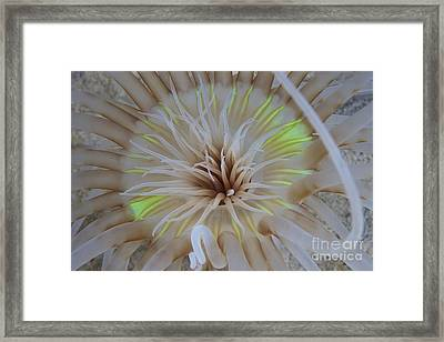 Sand Anemone With Flurescent Green Framed Print