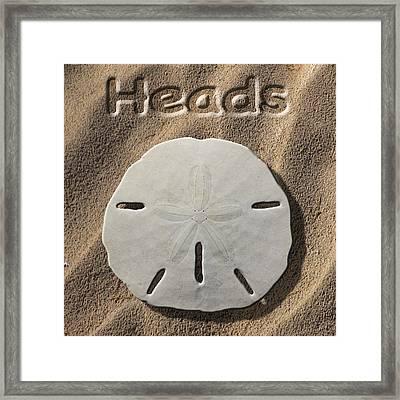 Sand Dollar Heads Framed Print by Mike McGlothlen
