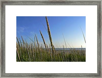 Sand Dune Grasses Framed Print by Pamela Patch