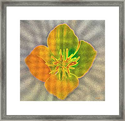 Sand Flower Framed Print by Mitch Shindelbower