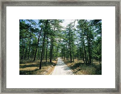 Sand Road Through The Pine Barrens, New Framed Print by Skip Brown