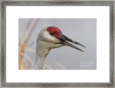 Sandhill Crane Portrait II Framed Print