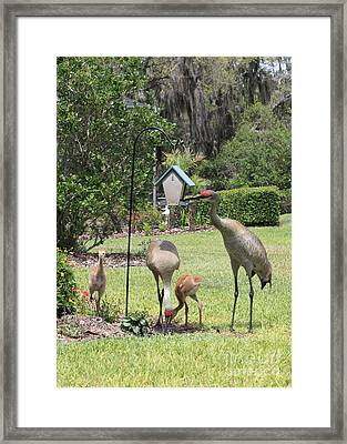Sandhill Garden Party Framed Print