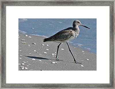 Sandpiper 1 Framed Print