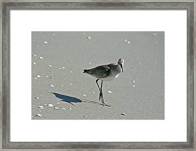 Sandpiper 3 Framed Print
