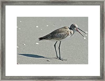 Sandpiper 4 Framed Print by Joe Faherty
