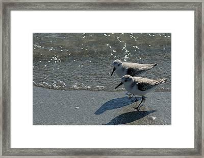 Sandpiper 5 Framed Print by Joe Faherty