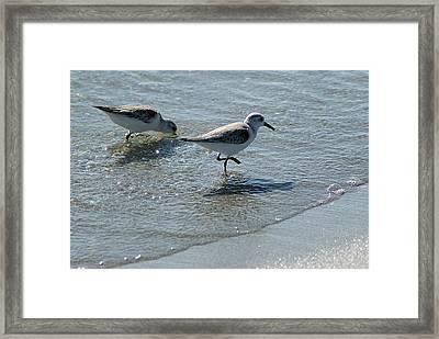 Sandpiper 7 Framed Print by Joe Faherty