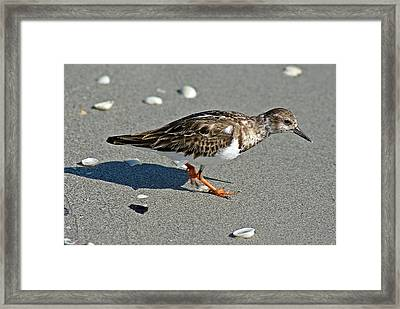 Sandpiper 9 Framed Print by Joe Faherty