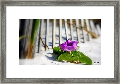 Sands Of Freedom Framed Print