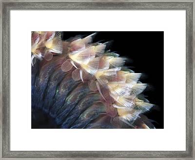 Sandworm Body Framed Print by Alexander Semenov