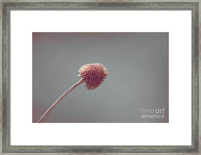 Sans Nom - S03 Framed Print by Variance Collections