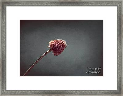 Sans Nom - S03at01b Framed Print by Variance Collections
