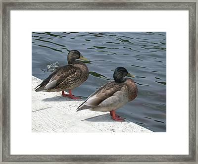 Sans-souci Guardians Framed Print