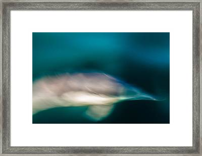 Santa Barbara Dolphin One Framed Print by Josh Whalen