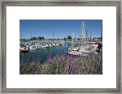 Santa Cruz Harbor - California Framed Print by Brendan Reals