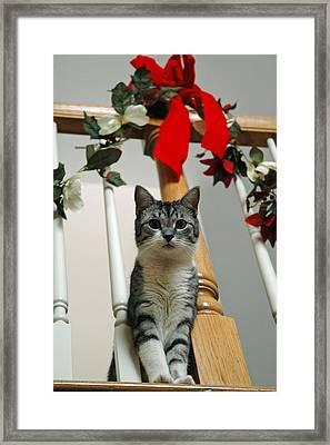 Santa Framed Print by LeeAnn McLaneGoetz McLaneGoetzStudioLLCcom