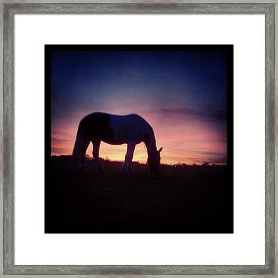 Santana #santana #horse #pferd Framed Print