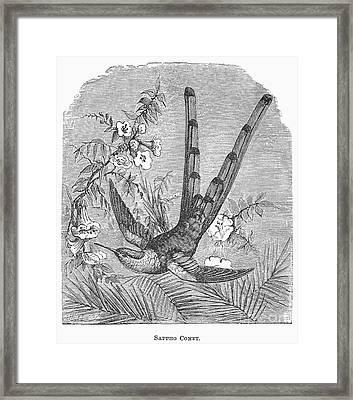 Sappho Comet Framed Print by Granger