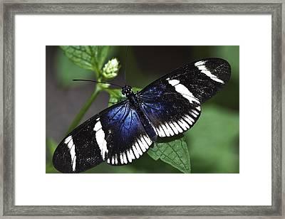 Sara Longwing Framed Print