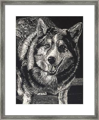 Sarge The Dog Framed Print by Robert Goudreau