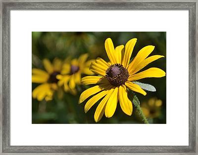 Sassy Yellow Framed Print by Alan Seelye-James
