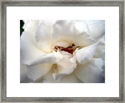 Satin White Framed Print