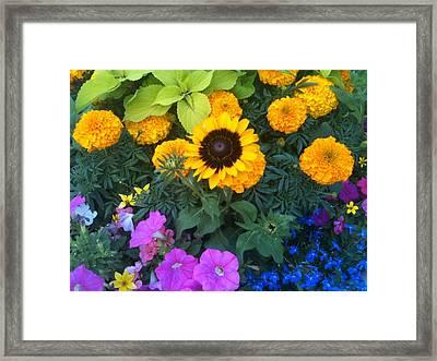 Framed Print featuring the photograph Savannah Beauty by Shawn Hughes