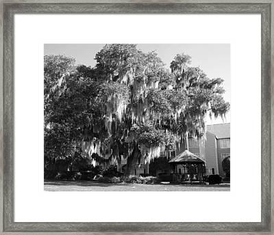 Savannah Framed Print by Magda Levin-Gutierrez