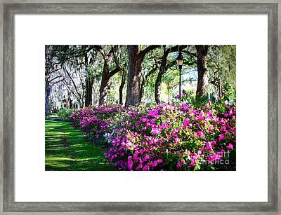 Savannah Spring Perspective Framed Print