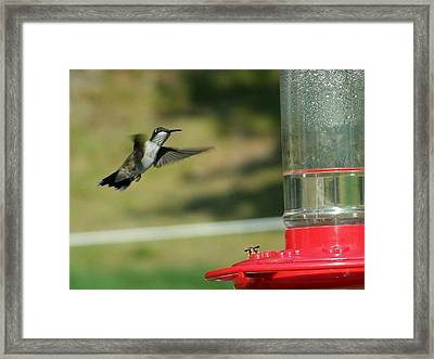 Save Some For Me Framed Print