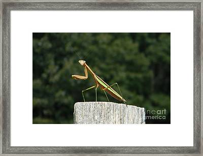 Say Cheese Framed Print by Gladys Steele