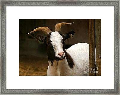 Framed Print featuring the photograph Say Cheese by Julie Clements