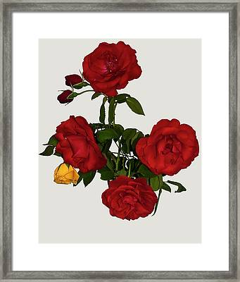 Say It With Flowers Framed Print by ©Daniela White Images