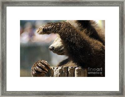 Saying Hello Framed Print by Jenny May