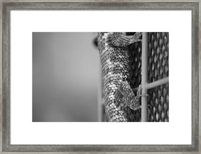 Scale And Grid Framed Print
