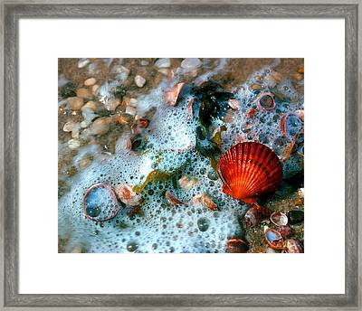 Framed Print featuring the photograph Scallop And Seaweed 11c by Gerry Gantt