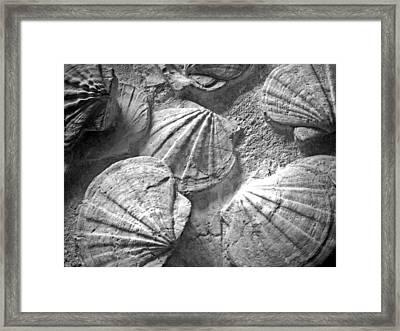 Scallops ... Framed Print by Juergen Weiss