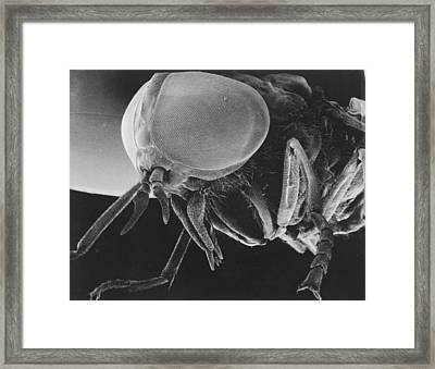 Scanning Electron Microscopic View Framed Print by Darlyne A. Murawski
