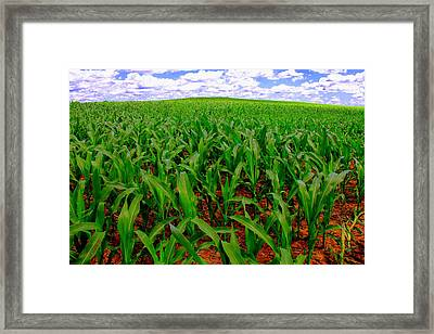 Scarecrow's Heaven Framed Print by Ed Smith