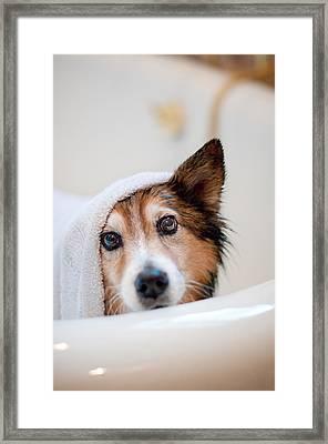 Scared Dog Getting Bath Framed Print