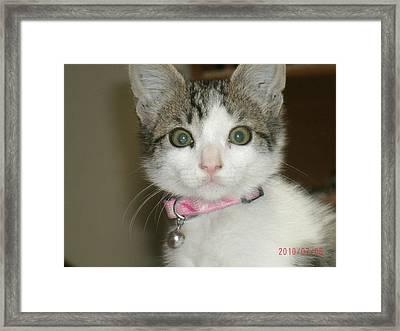 Scared Kitty Framed Print by Michael Elliott