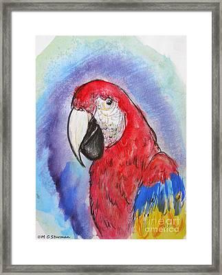 Scarlet Macaw Framed Print by M c Sturman