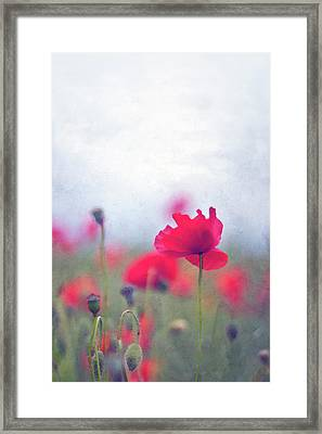 Scarlet Poppies In Painterly Style Framed Print by Image by Catherine MacBride