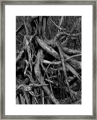 Scary Branches Framed Print